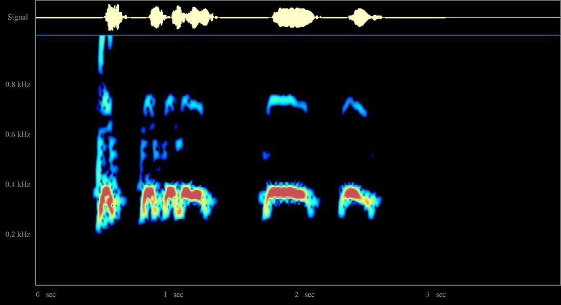 Spectrogram of a great horned owl's hoot