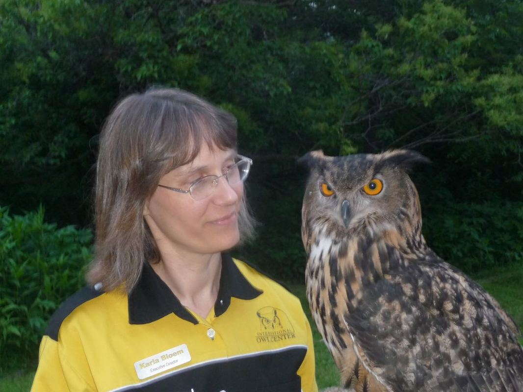 Karla holding Uhu the eurasian eagle owl